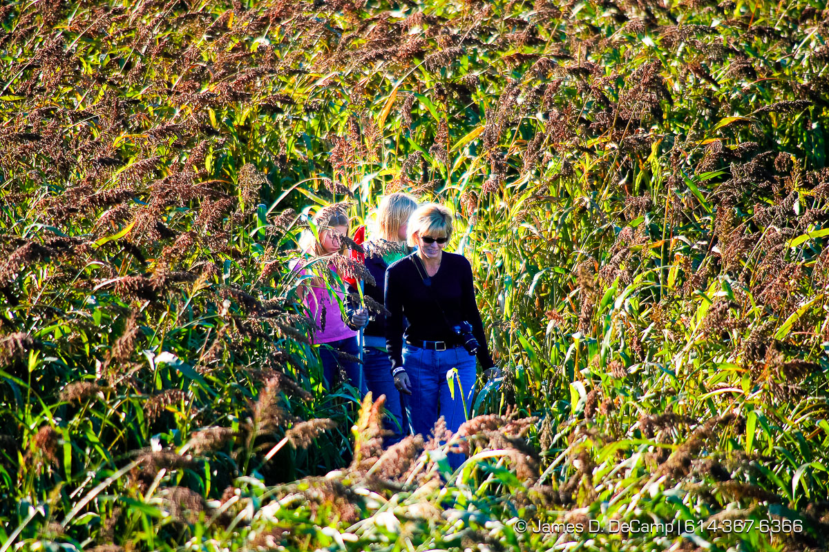The Chatterton family lead by Mom Carol makes their way through the corn maze in the fields of Lynd's Fruit Farm in Licking County photographed Saturday October 20, 2007. (© James D. DeCamp | http://www.JamesDeCamp.com | 614-367-6366) [Photographed with Canon 1D MkII cameras in RAW mode with L series lenses] POY2007 Entry
