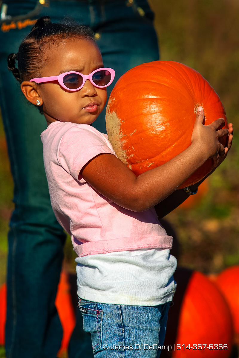 Janiyah Woods, 4, Columbus, carries a pumpkin from the patch in the fields of Lynd's Fruit Farm in Licking County Saturday afternoon October 20, 2007. (© James D. DeCamp | http://www.JamesDeCamp.com | 614-367-6366) [Photographed with Canon 1D MkII cameras in RAW mode with L series lenses]