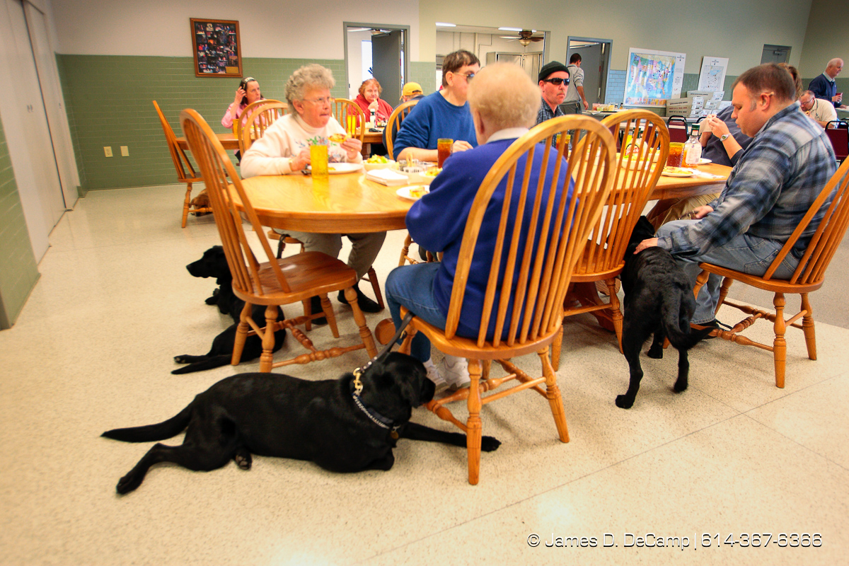 'Dee Dee', right, and 'Corky', right, wait patiently as their owners (Elaine Brittain and Phil Jackson) eat lunch in the Pilot Dogs, Inc lunchroom Friday December 5, 2008. (© James D. DeCamp | http://www.JamesDeCamp.com | 614-367-6366) [Photographed with Canon 1D MkIII cameras in RAW mode with L series lenses]