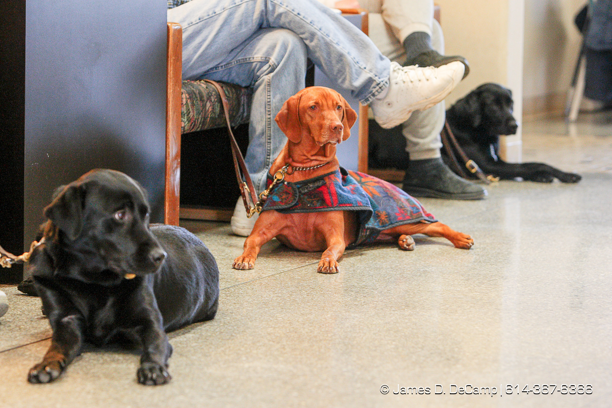 dogs left to right - Dee Dee, Brice, and Kerry wait patiently for their owners in the Pilot Dogs, Inc common room Friday December 5, 2008. (© James D. DeCamp | http://www.JamesDeCamp.com | 614-367-6366) [Photographed with Canon 1D MkIII cameras in RAW mode with L series lenses]